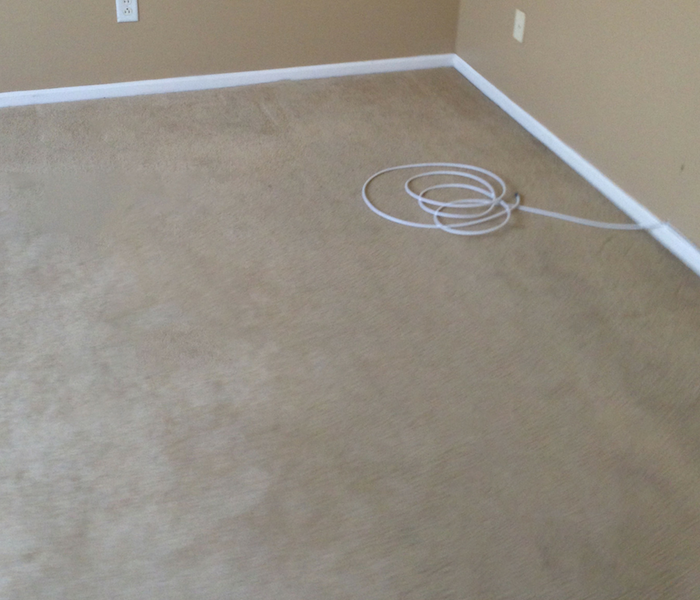 Carpet Cleaning in Colorado Springs After