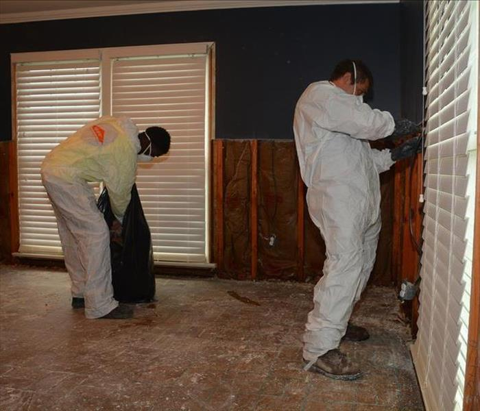 Mold Remediation in Security