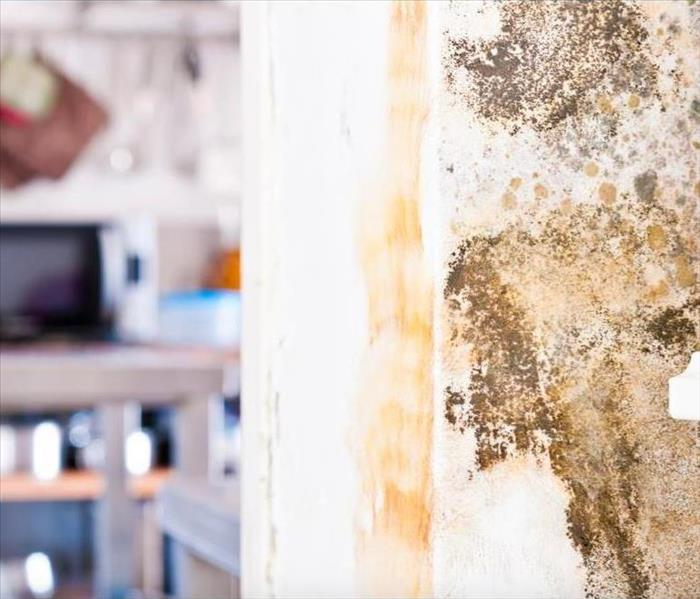Mold Remediation Some Necessary Steps to Facilitate Colorado Springs Mold Damage Remediation
