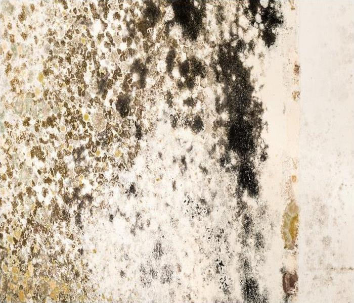 Mold Remediation Mold Damage Myths: Our Experts Guide To Mold In Your Colorado Springs Home