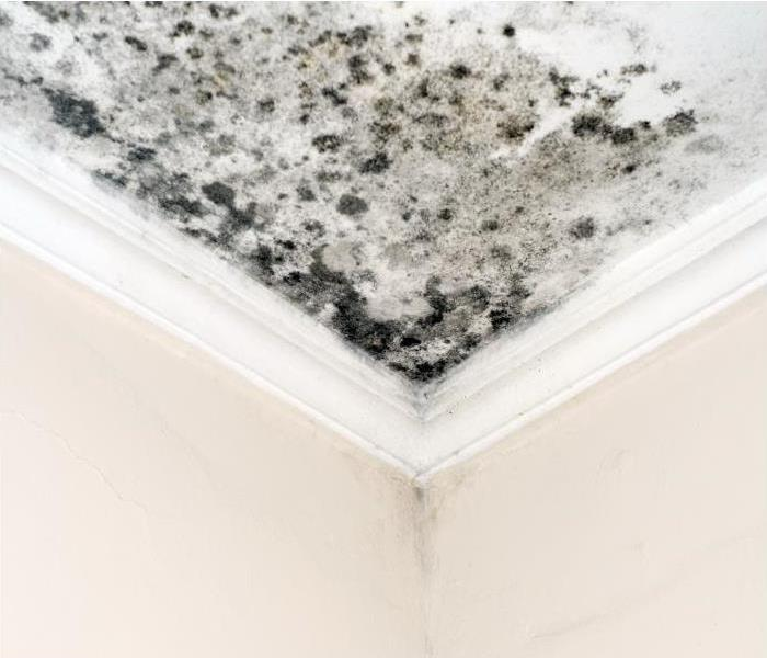 Why Servpro Is Your Best Option When Dealing With Mold In Colorado Springs Home