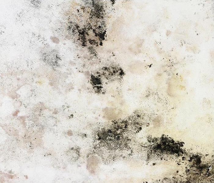 Mold Remediation Small Leaks Can Create Mold Damage In Your Colorado Springs Residence