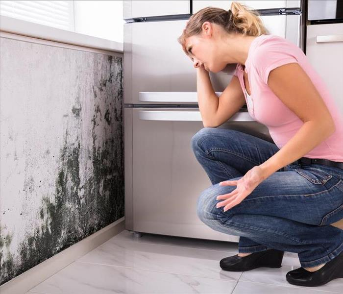 Mold Remediation  Moisture In Your Colorado Springs Basement Could Support Mold Growth