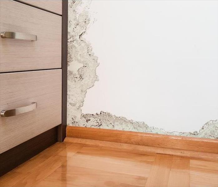 Commercial Mold Damage Is Not Enough to Bring Down Your Colorado Springs Based Business